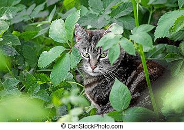 Portrait of tabby cat sitting in nettle.