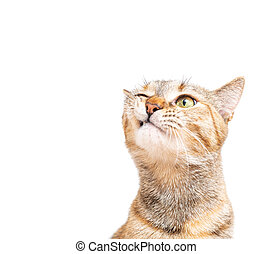 Portrait of tabby cat with funny expression.
