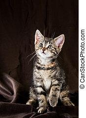 Portrait of tabby kitten with few red spots