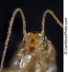 Portrait of the cockroach.