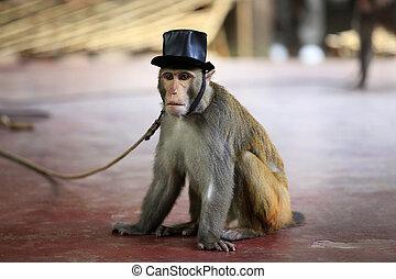 Portrait of the monkey