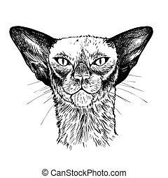 Portrait of the oriental cat, hand drawn vector