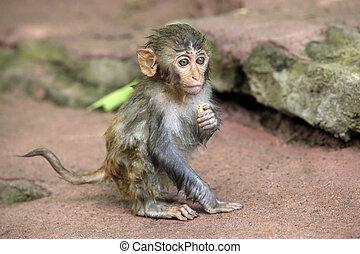 Portrait of the sad monkey. - The small wet monkey. Park of ...