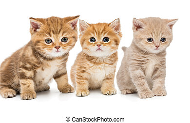Portrait of three little kittens