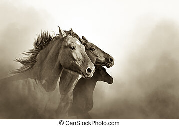 portrait of three mustang horses in sunset bw