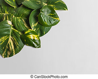 tropical leaves assorted on grey background