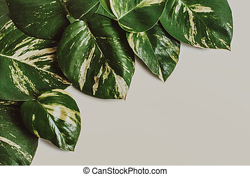 tropical leaves assorted on pastel creme background