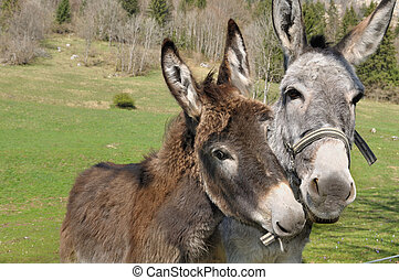 portrait of two donkeys - portrait of two lovely and funny ...