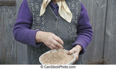 Portrait of very old smiling woman looking through the bowl of wheats' grains