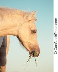 portrait of welsh pony filly at sky background. close up