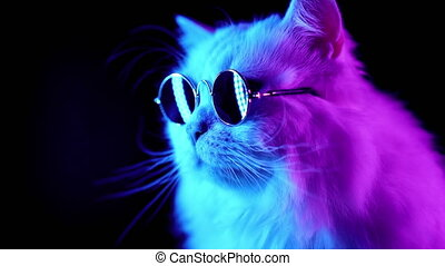 Portrait of white furry cat in fashion eyeglasses. Studio...