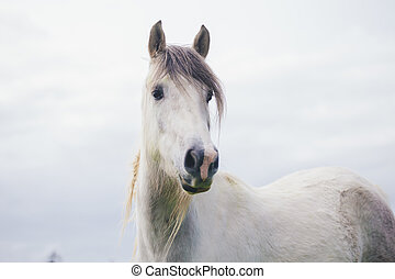 Portrait of White Horse Looking away in New Zealand