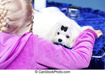 Portrait of white Yorkshire terrier with a bow and a girl