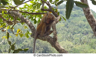 Portrait of wild sad monkey sitting on the branch of tree in...