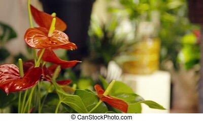 portrait of woman in flower shop ar
