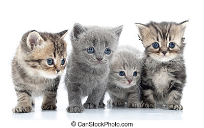 Portrait of young cats' group . Studio shot. Isolated. -...