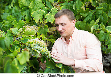 Portrait of young farmer near grapes in vineyard