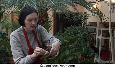 Portrait of young woman in apron taking care of plants and flowers in greenhouse