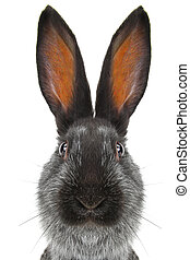 portrait  rabbit on a white background