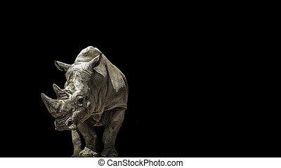 Portrait rhino on the black