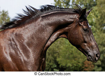 portrait running horse