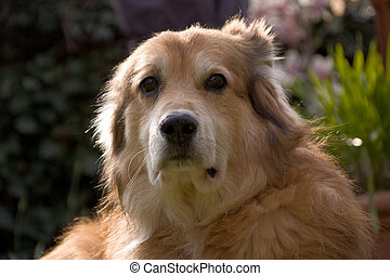 Portrait shot of a mixed breed dog from Romania in the garden at spring time