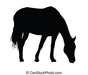 Portrait Silhouette of Large Horse Grazing - Detailed...