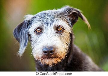 Portrait Terrier Crossbreed Dog Green Background - Closeup...