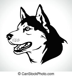 Portrait vector illustration of Siberian Husky dog breed