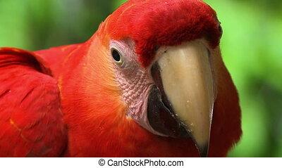 Portrait View Of Ara Macao Parrot, Manu, Peru - Extreme ...