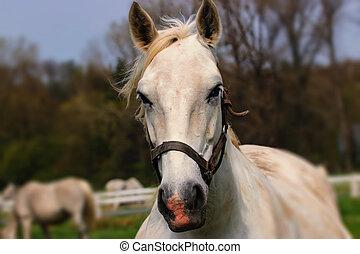 Portrait white horse in wind