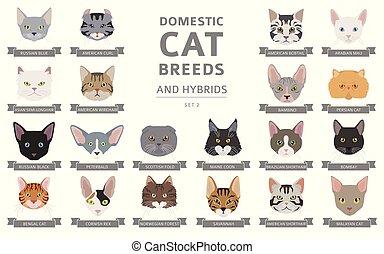 portraits, hybrides, ensemble, plat, chat, cat`s, conjugal, ...