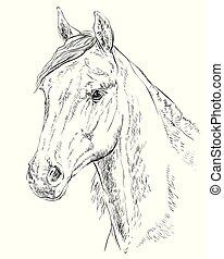 portret, koń