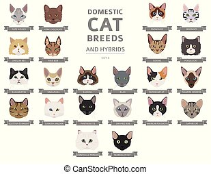 portrety, hybrydowy, komplet, płaski, kot, cat`s, krajowy, ...