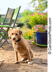 Portriat little cross breed dog in jardin