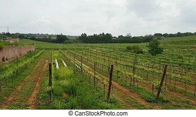 portugais, vignobles, algarve, méridional, region.