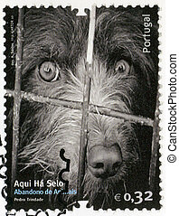 PORTUGAL - 2010: shows dog, image of abandonment of animals