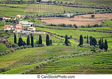Portugal countryside vineyards