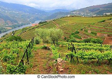 Portugal Douro vineyards