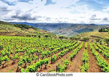 Portugal vineyard landscape