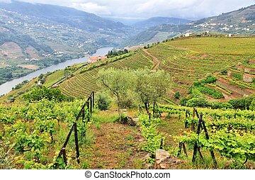 Portugal vineyard rural landscape