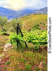 Portugal vineyards landscape