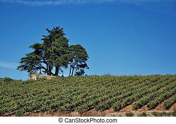 Portugal. Vineyards