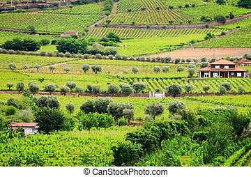 Portugal wine land