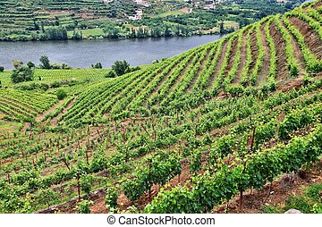 Portugal winery landscape
