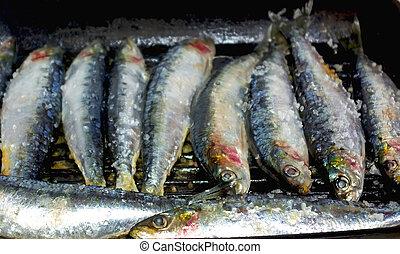 portugués, sardinas, .