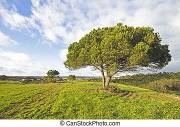 Portuguese landscape in spring