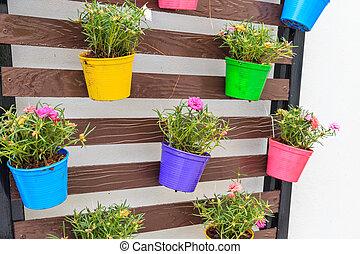 portulaca, oleracea, alatt, szín, telepes, doboz, felakaszt,...