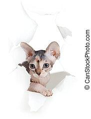 porwany, odizolowany, kot, papier, otwór, bok