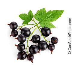 porzeczka, liście, świeży, zielony, owoce